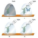 Biology - dark and light environment vector illustration