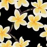 Seamless pattern yellow pastel Frangipani plumeria flowers. royalty free illustration
