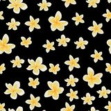 Seamless pattern, background with white plumeria on black backdrop. Hand drawn colorful illustration stock illustration