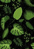 Realistic illustration of tropical plant leaves set. Monstera, fern, palm, yucca. Tropical plant concept dot background. Realistic illustration of tropical plant royalty free illustration