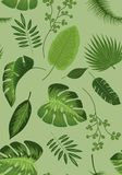 Realistic illustration of tropical plant leaves set. Monstera, fern, palm, yucca. Tropical plant concept. Green background royalty free illustration