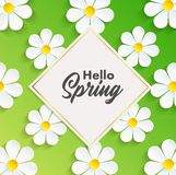 Hello Spring background with camomile flowers stock illustration