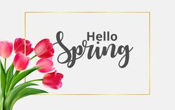 Hello Spring with tulip flowers royalty free illustration