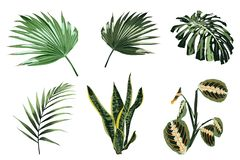 Tropical plants, leaves and palms set. Exotic illustrations, floral elements isolated, Hawaiian bouquet. vector illustration