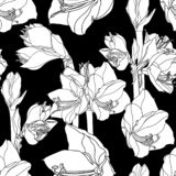 Amaryllis hippeastrum lilly flower branch black and white outline sketch seamless pattern. Spring floral bouquet foliage element. royalty free illustration