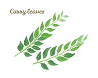 Green leaves curry isolated on white background. royalty free illustration
