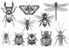 Insect illustration, drawing, engraving, ink, line art, vector. Illustration, what made by ink, then it was digitalized stock illustration