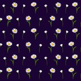 Chamomile flowers with green stem and leaves on a dark-blue background vector illustration