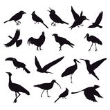 Silhouette of birds on white. Lots of birds vector silhouettes isolated on white background. vector file included vector illustration