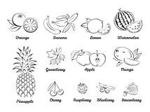 Berries and fruits. Set of black and white icons. vector illustration
