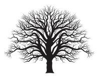 Silhouette of oak tree. royalty free illustration