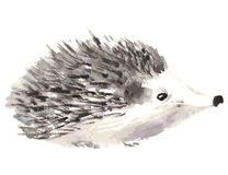 Hedgehog isolated on white background. Watercolor vector illustration royalty free illustration