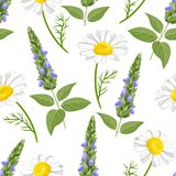 Sage and chamomile seamless pattern on white background. stock illustration