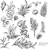 Floral Elements Hand drawn vector set royalty free illustration