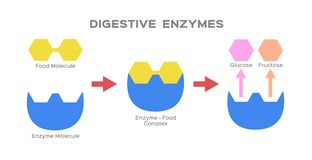 Digestive enzyme  on white background