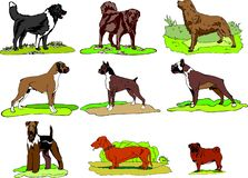Dogs of Different breeds stay on grass, logo, print, instant download, Dog Clip Art set svg formats. royalty free illustration