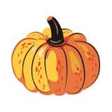 Autumn harvest pumpkin. Healthy ecological food vector illustration
