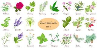 Print. Big vector set of popular essential oil plants. Rose, Geranium, lavender, mint, melissa, Chamomile, cedar, pine, juniper, rosehip etc. For cosmetics store Stock Images
