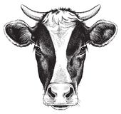 Black and white sketch of a cow`s face.