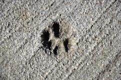 Print of cat paw Stock Photo