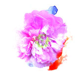 Print flower of a wild rose watercolor style. Royalty Free Stock Photo