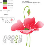 Print red poppy Royalty Free Stock Images