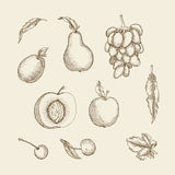 Print. Vector illustration. Set of different fruit painted in engraving style. Plum, peach, grapes, apple, pear, cherry and leaves Stock Photo