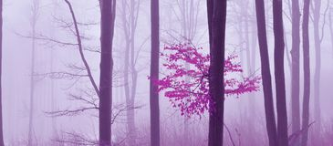 Fog in the forest. Colored mystic background. Magical forest. Magic Artistic Wallpaper. Fairytale. Dream, line. Tree in a foggy. Print for Wallpaper. Fantasy