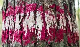 Print on wood. Red and white paint on the bark of a tree / Print on wood with color paint Stock Photos
