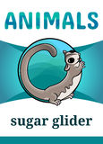 Printable animal flash card. Illustration. Suitable for teaching children new words. Adorable sugar glider, cartoon style Stock Images