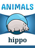 Printable animal flash card. Illustration. Suitable for teaching children new words. Hippo or hippopotamus, cartoon style Stock Photography
