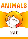 Printable animal flash card. Illustration. Suitable for teaching children new words. White rat, cartoon style Royalty Free Stock Image