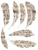 Printable set grungy akwarela rocznik upierza na białym tle royalty ilustracja