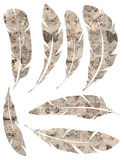 Printable Set of grungy watercolor vintage feathers on white background Stock Photos