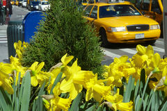 Printemps à New York City Images libres de droits