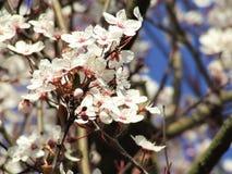 printemps image stock
