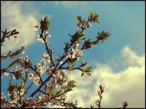 printemps Photos libres de droits