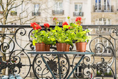 Printemps avec les géraniums rouges sur un balcon à Paris, France Images stock
