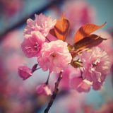 printemps Beau fond floral d'abrégé sur ressort de nature Branches de floraison des arbres pour des cartes de voeux de ressort av Photos stock