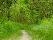 printemps Chemin dans les bois Photos stock
