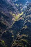 Printemps dans le canyon Photo stock