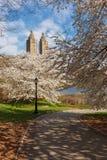 Printemps dans le Central Park avec Yoshino Cherry Trees, New York photo libre de droits