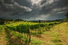Printemps dans le chianti Beaux vignobles avec le ciel nuageux en Toscane l'Italie photographie stock