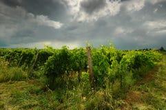 Printemps dans le chianti Beaux vignobles avec le ciel nuageux en Toscane l'Italie image stock