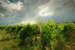 Printemps dans le chianti Beaux vignobles avec le ciel nuageux en Toscane l'Italie photo libre de droits