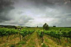 Printemps dans le chianti Beaux vignobles avec le ciel nuageux en Toscane l'Italie photographie stock libre de droits
