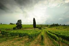 Printemps dans le chianti Beaux vignobles avec le ciel nuageux en Toscane l'Italie images stock