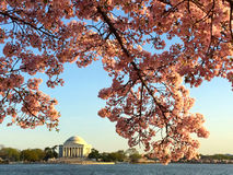 Printemps dans le Washington DC photographie stock libre de droits