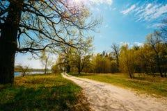 Printemps en parc Jeune herbe verte, arbres dessus Photos libres de droits