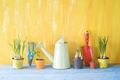 Printemps faisant du jardinage, jeunes fleurs, ustensiles de jardinage Photographie stock libre de droits